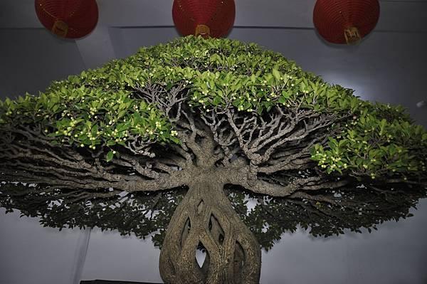 2015台灣花菓盆栽展0432.jpg