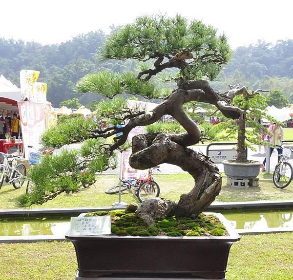 2015明潭松韻樹石大展0027.jpg