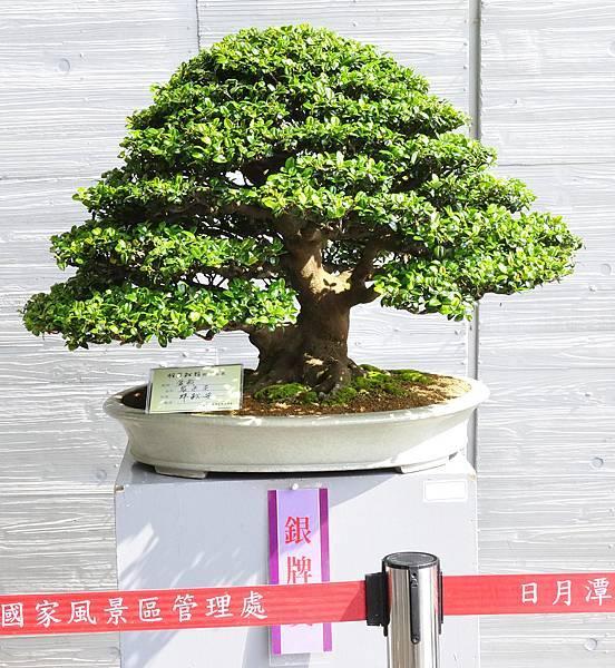 2015明潭松韻樹石大展0043.jpg