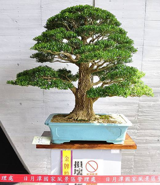 2015明潭松韻樹石大展0047.jpg
