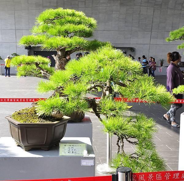 2015明潭松韻樹石大展0051.jpg