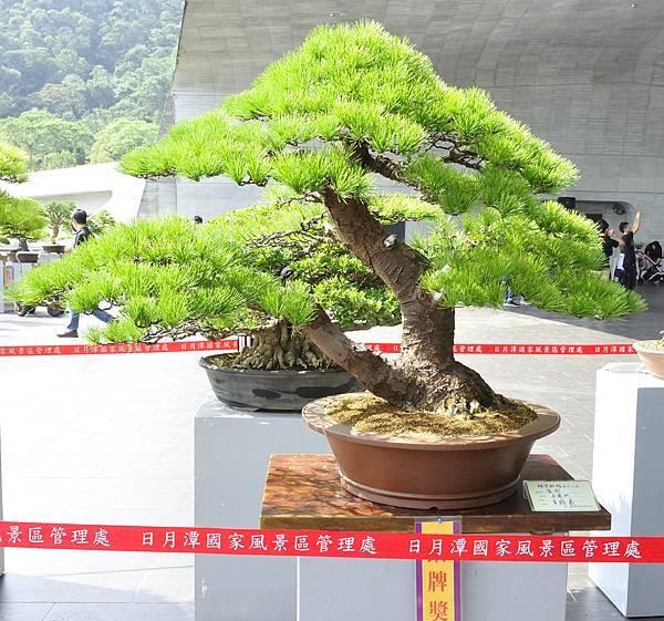 2015明潭松韻樹石大展0055.jpg