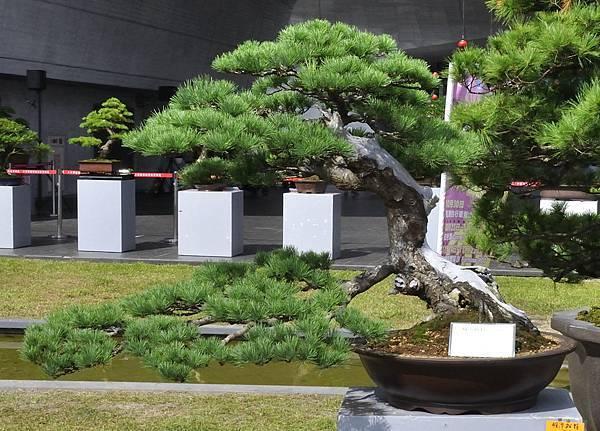 2015明潭松韻樹石大展0073.jpg