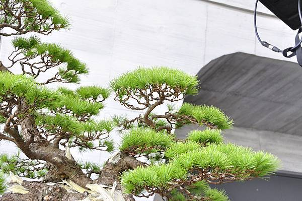 2015明潭松韻樹石大展0169.jpg