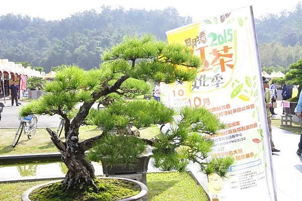 2015明潭松韻樹石大展0211.jpg