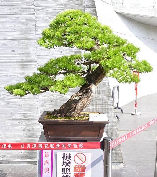 2015明潭松韻樹石大展0222.jpg