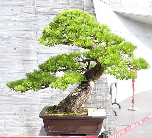 2015明潭松韻樹石大展0223.jpg