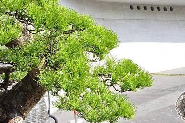 2015明潭松韻樹石大展0232.jpg