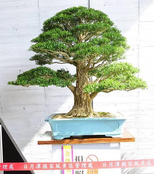 2015明潭松韻樹石大展0256.jpg