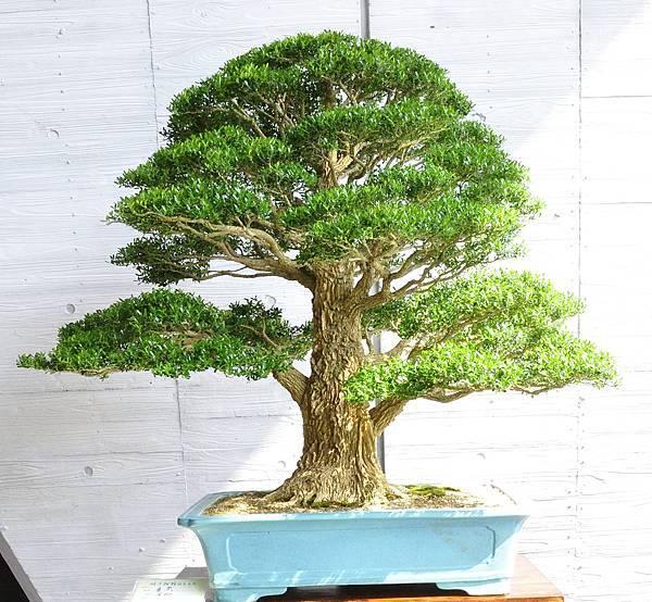 2015明潭松韻樹石大展0257.jpg