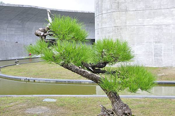 2015明潭松韻樹石大展0291.jpg