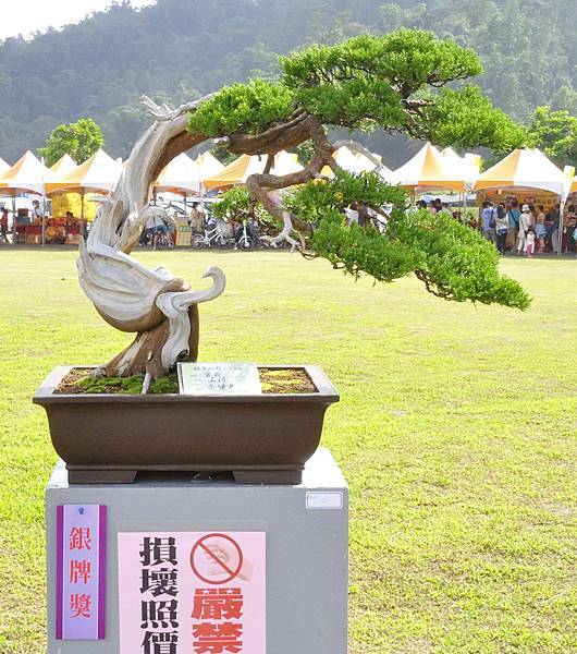2015明潭松韻樹石大展0325.jpg