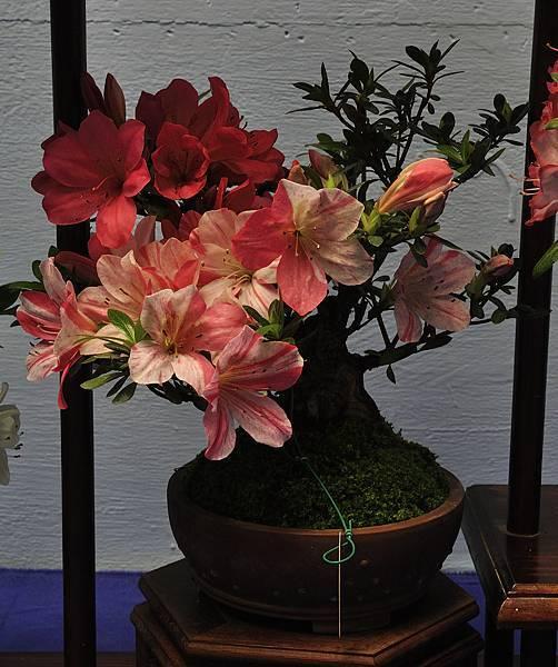 2016皋月展_00305.jpg