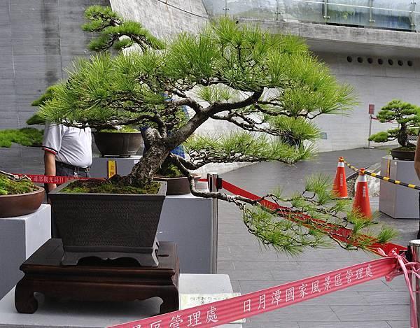 2016明潭松韻樹石大展_00071.jpg