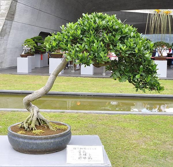 2016明潭松韻樹石大展_00175.jpg