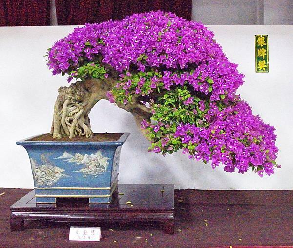 2016台灣花菓盆栽展_00033.jpg