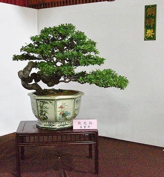 2016台灣花菓盆栽展_00084.jpg