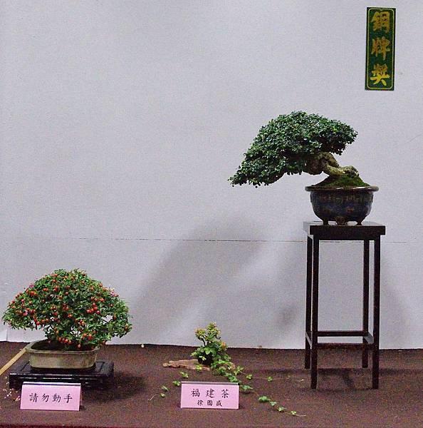 2016台灣花菓盆栽展_00113.jpg