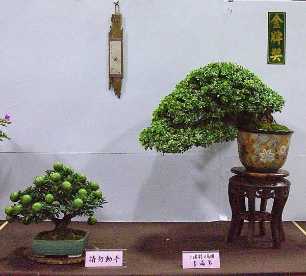 2016台灣花菓盆栽展_00125.jpg