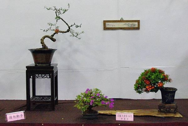 2016台灣花菓盆栽展_00146.jpg