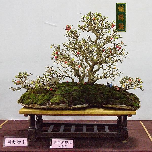 2016台灣花菓盆栽展_00154.jpg