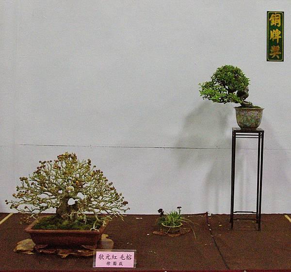 2016台灣花菓盆栽展_00171.jpg