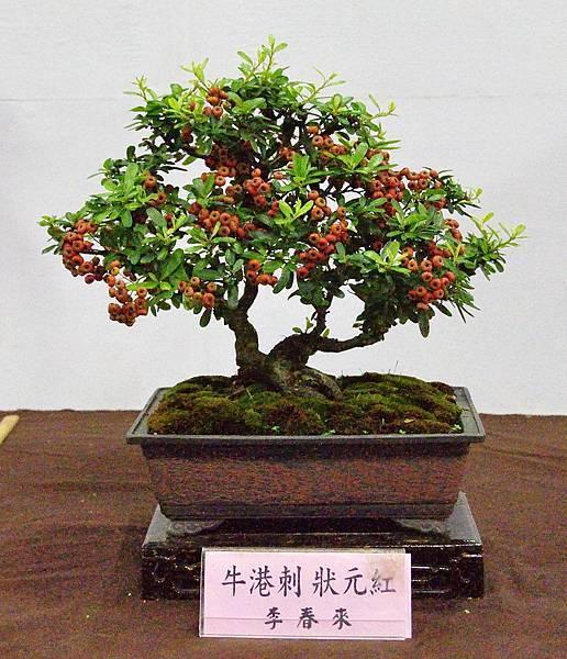 2016台灣花菓盆栽展_00170.jpg