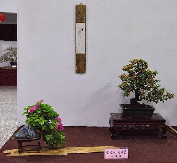 2016台灣花菓盆栽展_00184.jpg