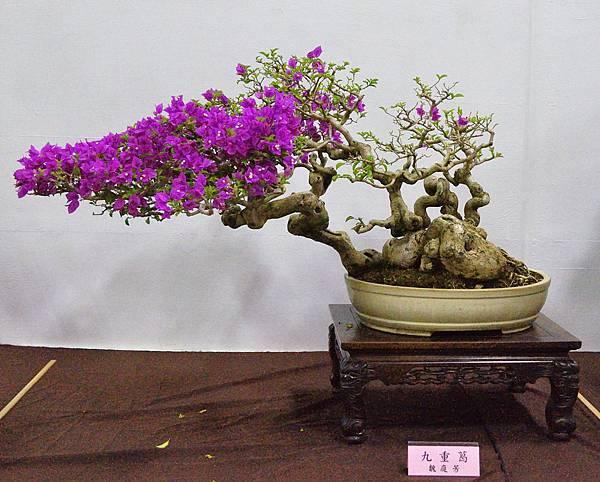 2016台灣花菓盆栽展_00186.jpg