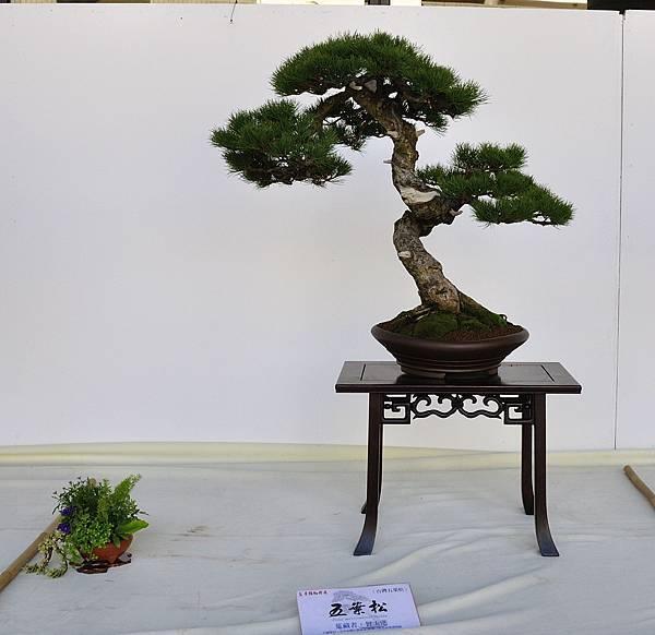 2016台中樹石展_00103.jpg