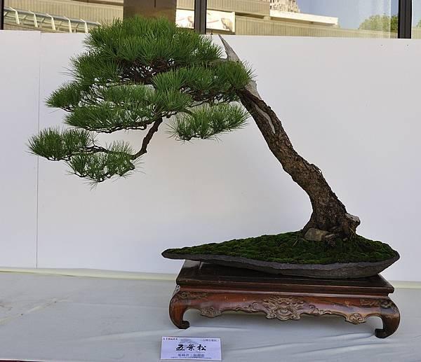 2016台中樹石展_00107.jpg