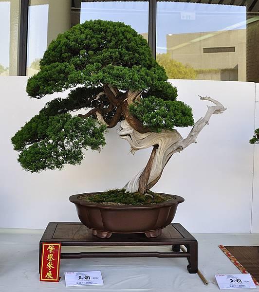 2016台中樹石展_00130.jpg
