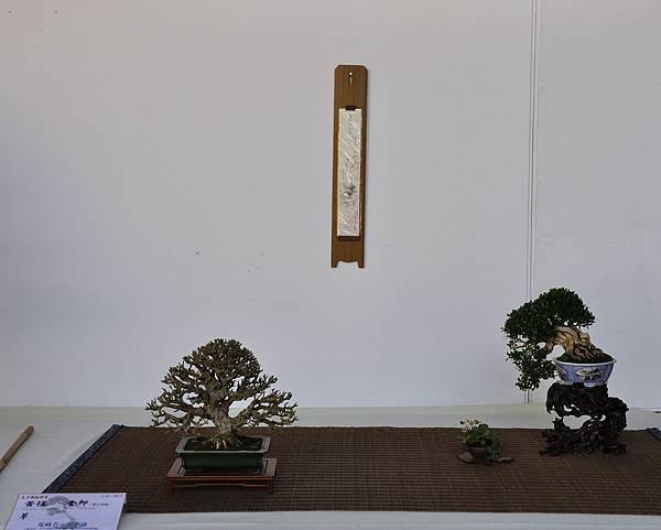 2016台中樹石展_00134.jpg