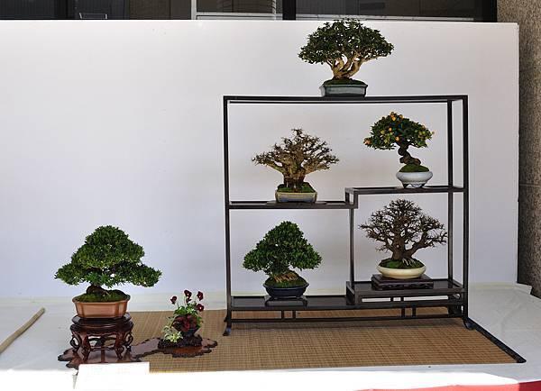 2016台中樹石展_00147.jpg