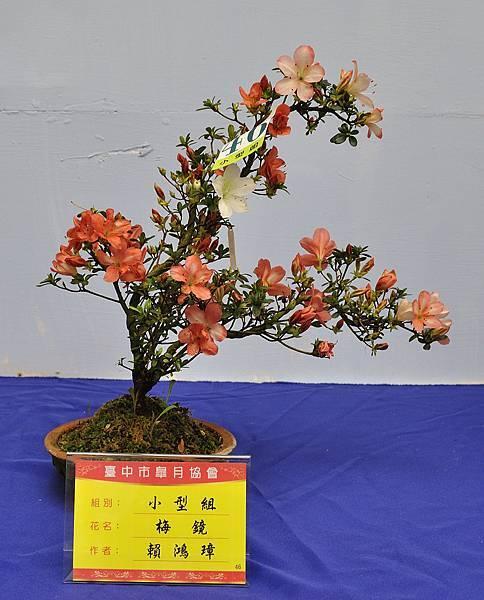 2017台中皋月展_00029.jpg