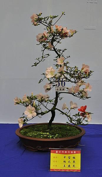 2017台中皋月展_00030.jpg