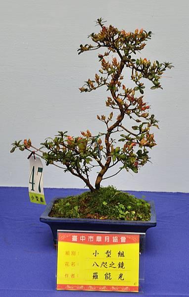 2017台中皋月展_00037.jpg