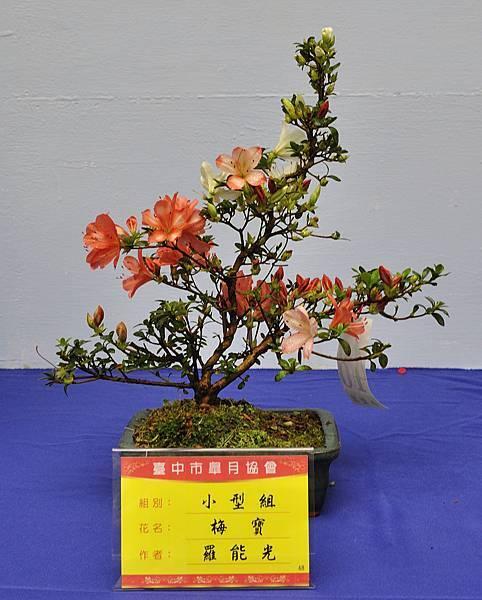 2017台中皋月展_00039.jpg