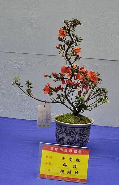 2017台中皋月展_00052.jpg