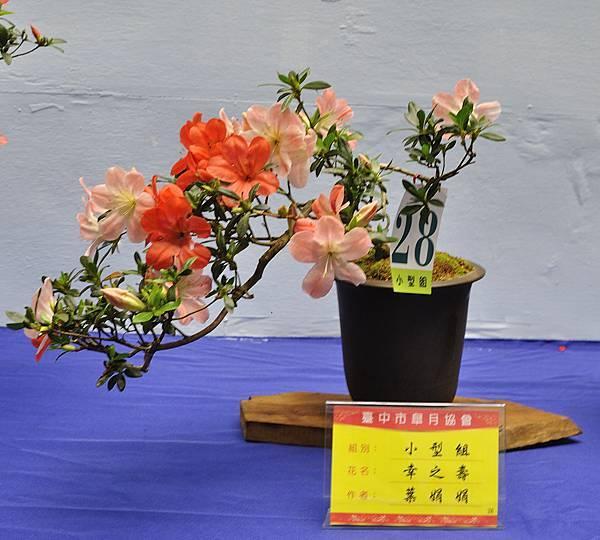 2017台中皋月展_00082.jpg