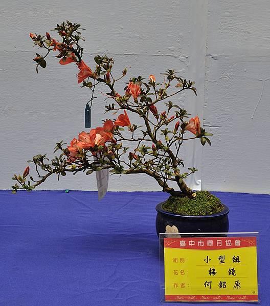 2017台中皋月展_00087.jpg