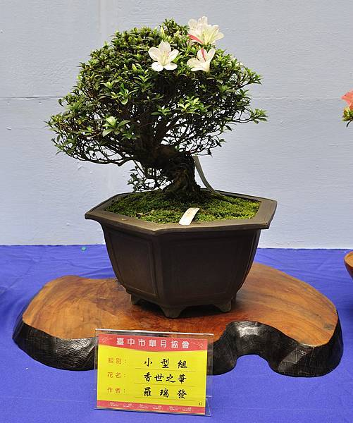 2017台中皋月展_00090.jpg