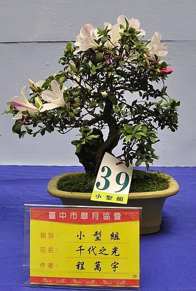 2017台中皋月展_00092.jpg