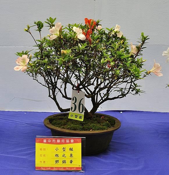 2017台中皋月展_00095.jpg