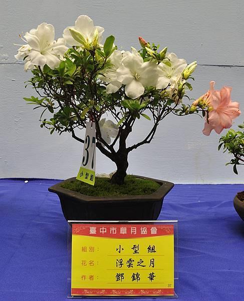 2017台中皋月展_00094.jpg