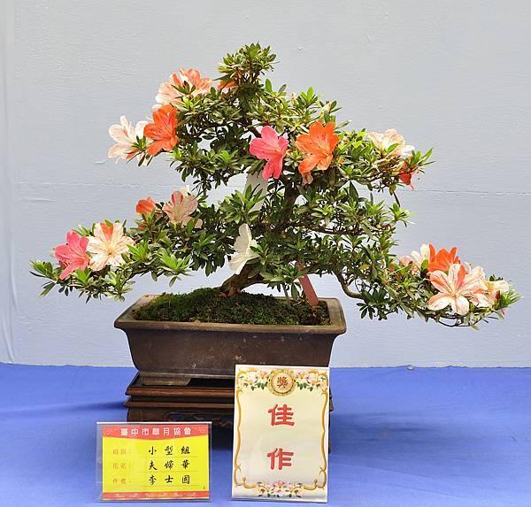 2017台中皋月展_00105.jpg