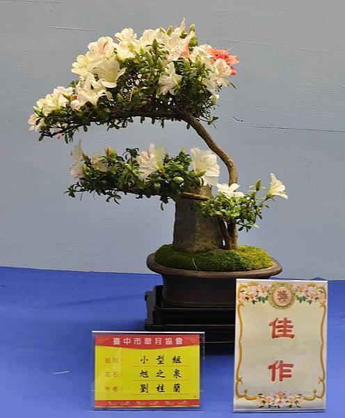 2017台中皋月展_00108.jpg
