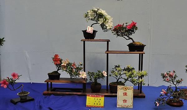 2017台中皋月展_00132.jpg
