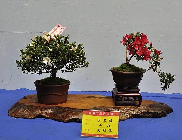2017台中皋月展_00133.jpg