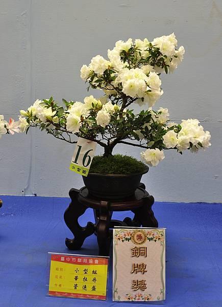 2017台中皋月展_00131.jpg